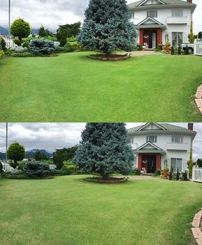 Grass_comparison_20190705_01a.jpg